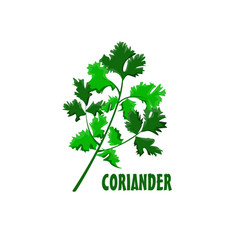 Logo coriander farm design vector