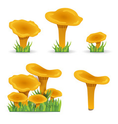 Set chanterelles mushrooms vegetable vector