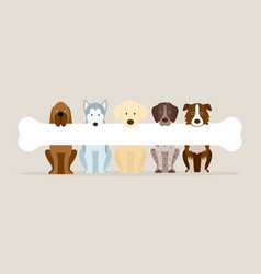 Group of dog breeds holding bone vector