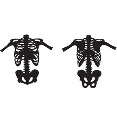 Part skeleton front and rear vector