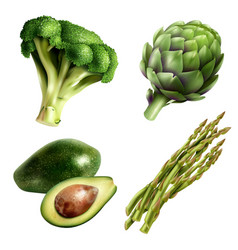 set of vegetables in realistic style vector image vector image