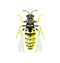 Top view of wasp - hornet on white background vector