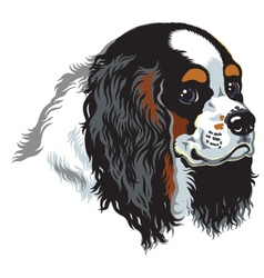 Tricolor cavalier king charles spaniel vector