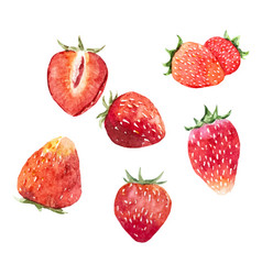Watercolor strawberry set vector