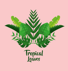 tropical leaves palm tree jungle foliage vector image