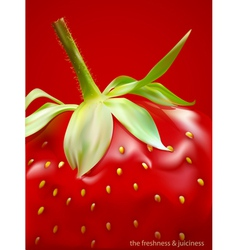 strawberry vs vector image