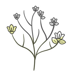 Beautiful branch with flowers decoration icon vector