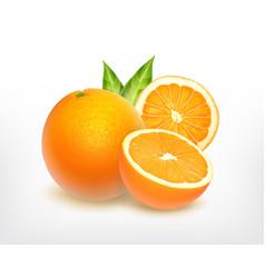 Orange fruit with slice vector