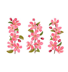 pink cherry blossom branches set isolated on white vector image