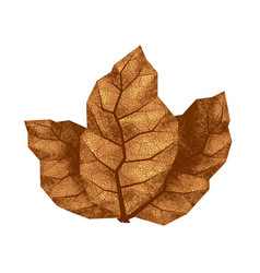 Three dry tobacco leaves vector