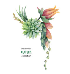 Watercolor bouquet cacti and succulent vector