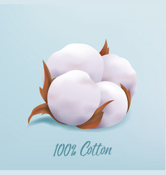 beautiful realistic cotton plant flower isolated vector image