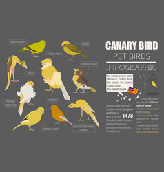 Canary breeds icon set flat style isolated on vector
