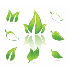 green eco leaves vector image