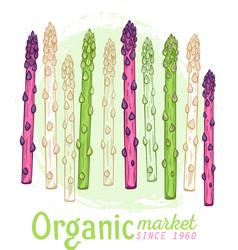 organic asparagus market hand drawn vector image