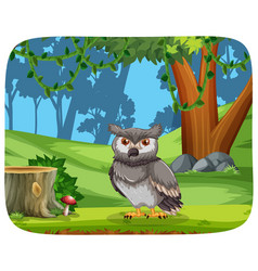 owl in jungle vector image