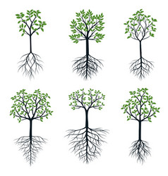 trees with leaves and roots outline vector image