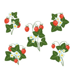 bushes of strawberries vector image