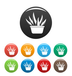 aloe vera pot icons set color vector image