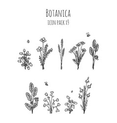 botanica - stylized nine items monochrome icons vector image