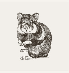 Hand drawn of a cute hamster vector