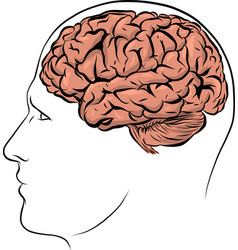 human face brown silhouette with brain vector image