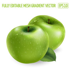 Two ripe green apples on a white background vector