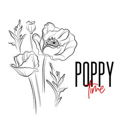 poppy flowers decorative print nature vector image