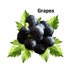 Grapes Low Poly vector image vector image