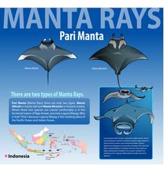 manta rays vector image