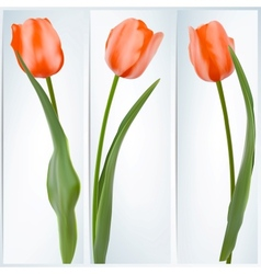 Set of banners with colorful flower EPS 10 vector image