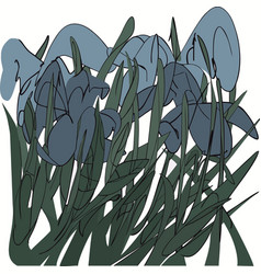 blue irises in the grass abstract vector image