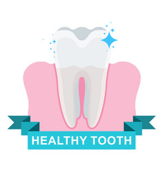 healthy tooth and gum vector image