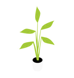 houseplant potted plant vector image