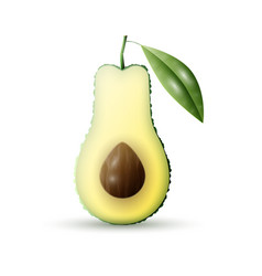 Realistic avocado vector