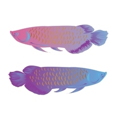 arowana fish isolated colorful vector image vector image