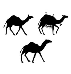 silhouettes of camels vector image vector image