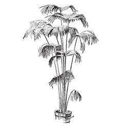 Carludovica palmata vintage vector