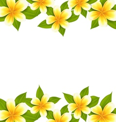 Decoration frame made in frangipani plumeria vector image