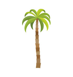 palm tree isolated on white vector image