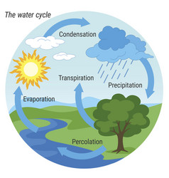 water cycle colour vector image