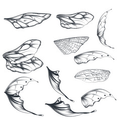collection light wings for design vector image