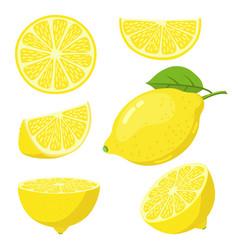 lemon slices citrus fruit slice juicy yellow vector image