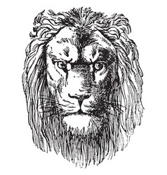 lion head is a prospectus dr schuberts vector image