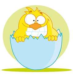 Little Chick Peeking Out Of An Egg Shell vector