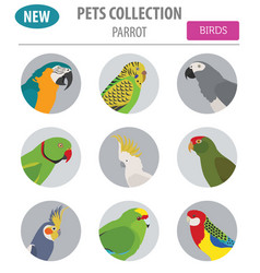 Parrot breeds icon set flat style isolated on vector