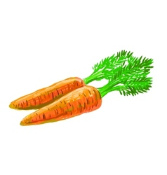picture of carrot vector image