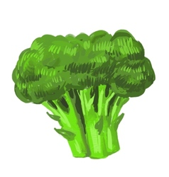 picture of broccoli vector image vector image
