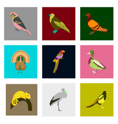 Set of in flat style birds vector