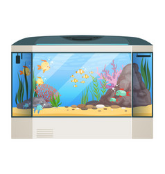 big aquarium fishes and water plants in glass vector image